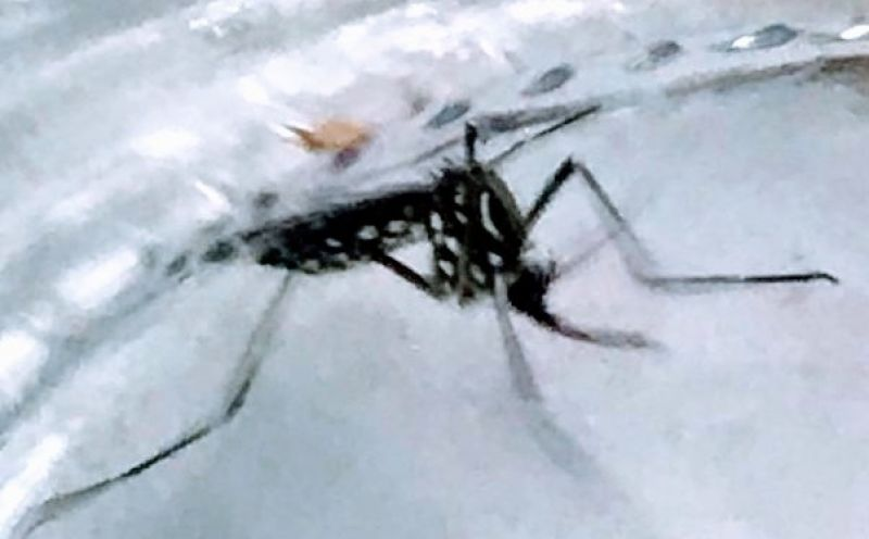 Foto de capa da notícia Conheça um pouco sobre o Aedes Aegypti