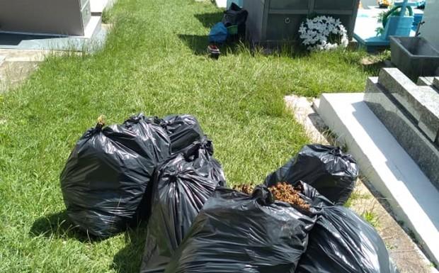 Foto de capa da notícia: Limpeza do cemitério no combate ao mosquito da dengue