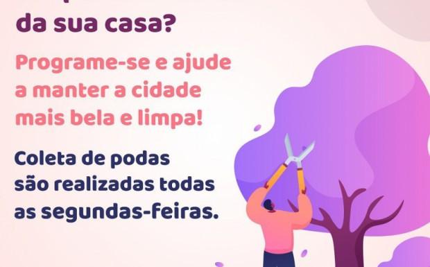 Foto de capa da notícia: CIDADE LIMPA, IPÊ MAIS BELO!